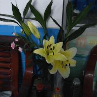 平常的花朵