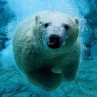 北极熊电影