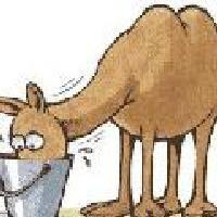 车载娱乐-骆予