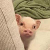 猪猪带你看世界
