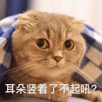 非典型的日猫子