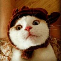 追游戏的猫咪