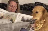 什么暖男,全都是骗我养狗编出来的鬼话!