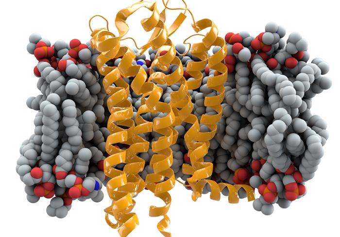 第一批用基因编辑工具定制DNA的婴儿诞生