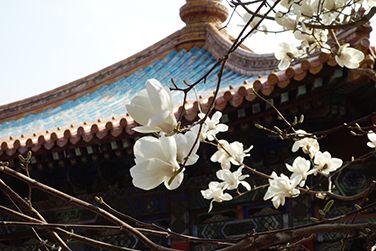 """错过宫廷雪景和上元灯会?故宫还有这""""乍泄的春光""""!"""