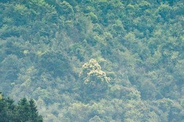 原创             湖南林公园而蟒蛇出没而得名,雾气朦胧似秘境!