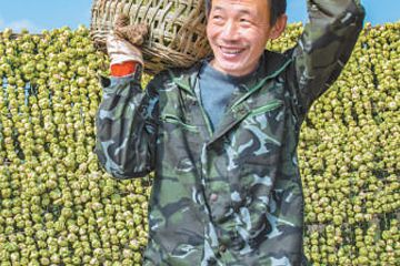 涪陵榨菜协作生产惠三方(经济发展亮点多韧性足)