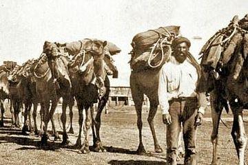 澳大利亚已射杀超5000头骆驼,BBC:与山火无直接关系
