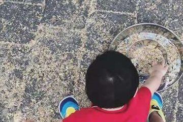 张歆艺带儿子爬山喂鸟,袁弘把鸟放头上逗儿子开心,四坨胖乎乎
